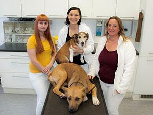 Logo Tierarztpraxis Dr. Kuzmits