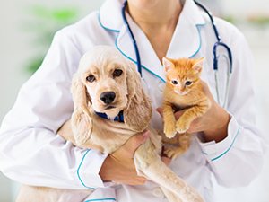 Zum Detaileintrag von Kleintierpraxis - Rosegger