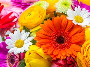 Zum Detaileintrag von Claudias Blumenwerkstatt