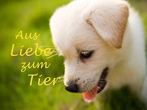 Zum Detaileintrag von Tierambulanz Deutsch Wagram - Josef Zoher