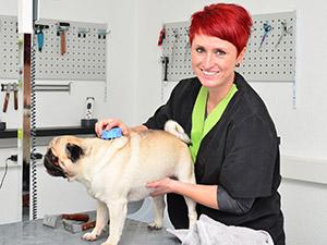 Zum Detaileintrag von Silvia Mayr Hundumschön - Hundesalon