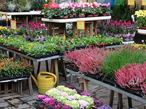 Zum Detaileintrag von Blumen Dicker
