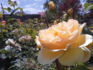 Logo Floral Design Zihr Michael J. Zihr