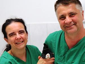 Logo Tierzahnheilzentrum DDr. Stoian & Dr. König