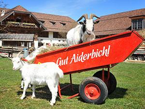 Logo GUT AIDERBICHL