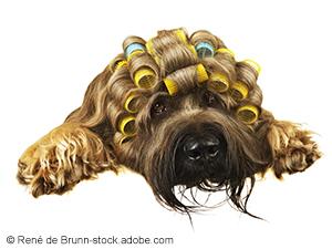 Logo Kalte Schnauze - Der Hundesalon