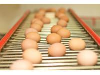 Eier auf dem Weg aus dem Stall