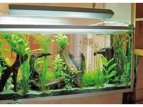 Vorschau - Aquarium