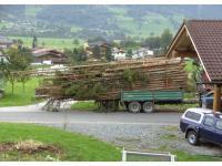 Holzfuhre - gut aufgelegt