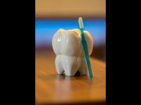 Zahn 1