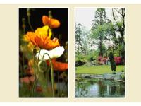 Stingl Gartengestalter - Garten- u. Grünflächenbau