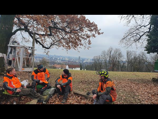 Vorschau - Baum.Art Team