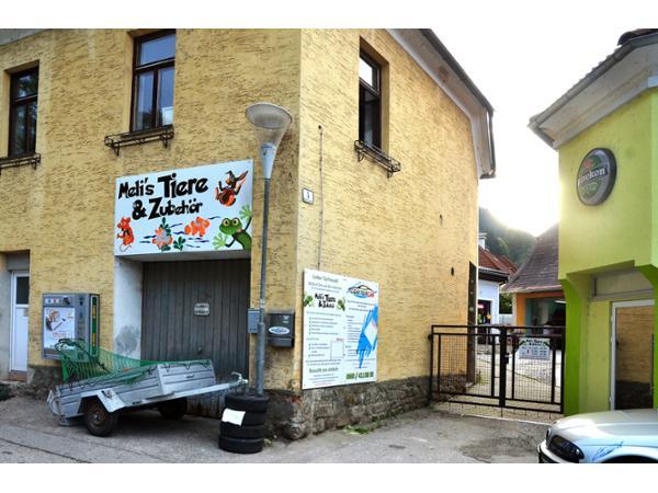 37 Wohnung Waidhofen An Der Ybbs Immobilien