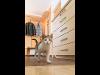 Thumbnail Vorzimmer mit Katze