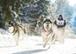 Trapper Day  -  das ideale Kunden-Incentive im Schnee!