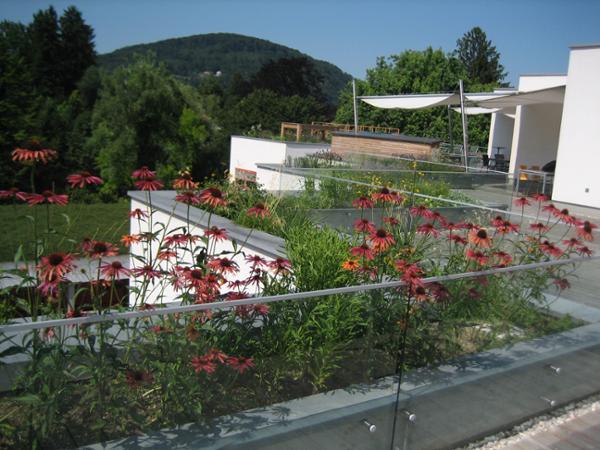 Vorschau - Dachterrassenbepflanzung im ORF Landesstudio