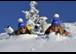 Ski & Fun Tage auf der Reiteralm (10.01.-30.01.2016)