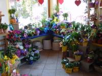 Gartenbau – Blumen Robert Reißer