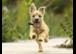 Welpen im Hundesalon - so früh wie möglich!