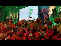 Die Flora 19