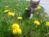 Unsere Katze Lucy