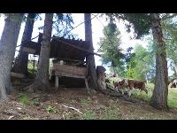 Baumhütte zum Wohlfühlen