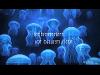 Thumbnail - Blaues Licht