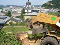 Sodl Franz Baum- und Gartenservice