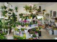 Flowercompany Topfpflanzenbereich