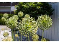 grünes HANDWERK - Kosmetik für Ihren Garten