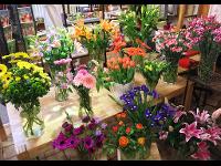 unsere tägliche Auswahl an frischen Schnittblumen