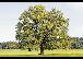 Special Treework - Die Baumspezialisten