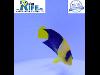Thumbnail Kaiserfisch