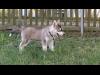 Wiener Hundeschule