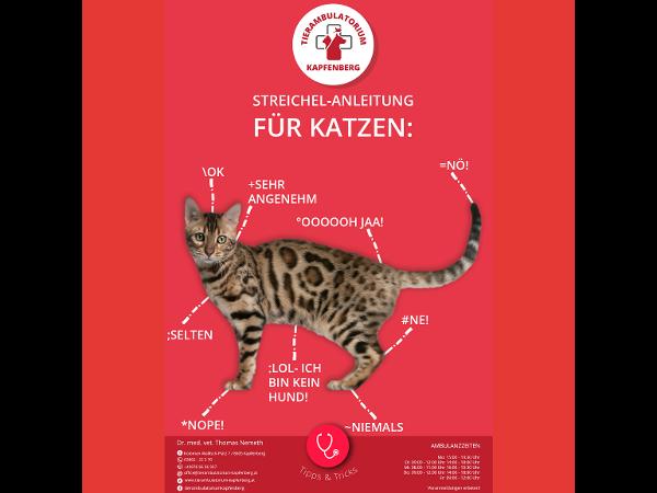 Streichel Anleitung für Katzen