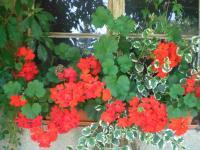 Was wäre ein Sommer ohne Blumen