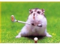 Golfhamster