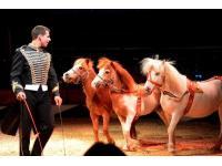 Ponydressur