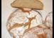Ihre Bäckerei und Haus Anni
