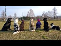 Gewöhnung Hund/Kind