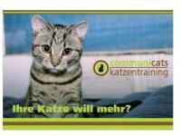 communicats Katzentraining