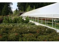 Freilandflächen, Pflanzenauswahl im Gartenzentrum in Stumm