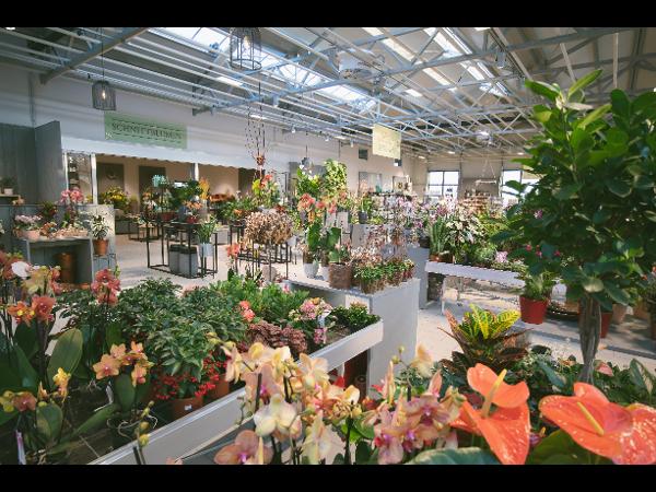 Vorschau - Zimmerpflanzen