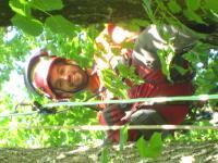 Sonniger Tag bei der Arbeit im Baum