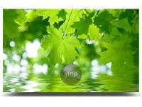 PELLEX Green Power GmbH