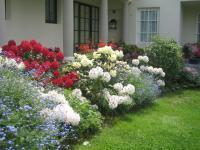 Blühendes Moorbeet mit Rhododendren und Azaleen