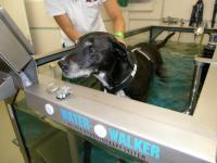 Physiotherapie/Unterwasserlaufband für Tiere