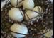 Ostern bei Blumen Egger