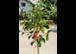 Das schönste Geschenk – Pflanzen aus österr. Baumschulen