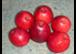 Apfelernte am Fattingerhof